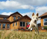 Tips and Advice for First-Time Pet Owners