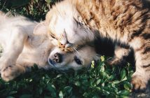 dog and cat laying together in the grass