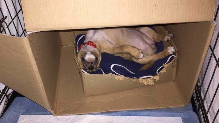 kyra sleeping in a box