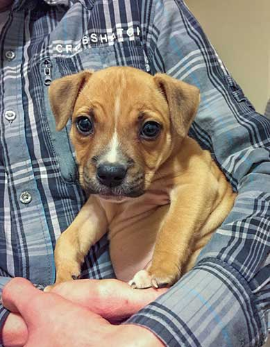 kyra - the cutest staffordshire bull terrier puppy and her owner