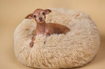 What Type of Bed Is Best For Your Dog?