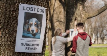 couple hanging lost dog flyers