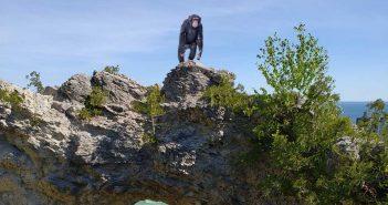 photoshopped mix of a monkey on mackinac island
