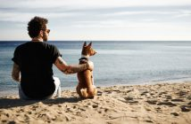a man sitting with his basenji dog on the beach