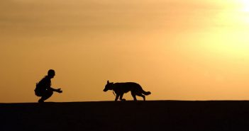 dog walking towards man silhouetted in sunset