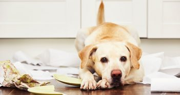 yellow lab making a mess on the kitchen floor