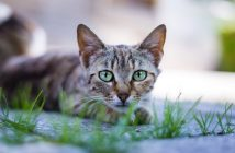cat laying on a sidewalk outside