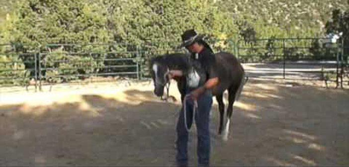 eric bravo gentle, natural horsemanship