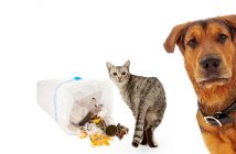 cat in the trash and a dog worried about it