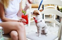 girl and her dog out at a restaurant