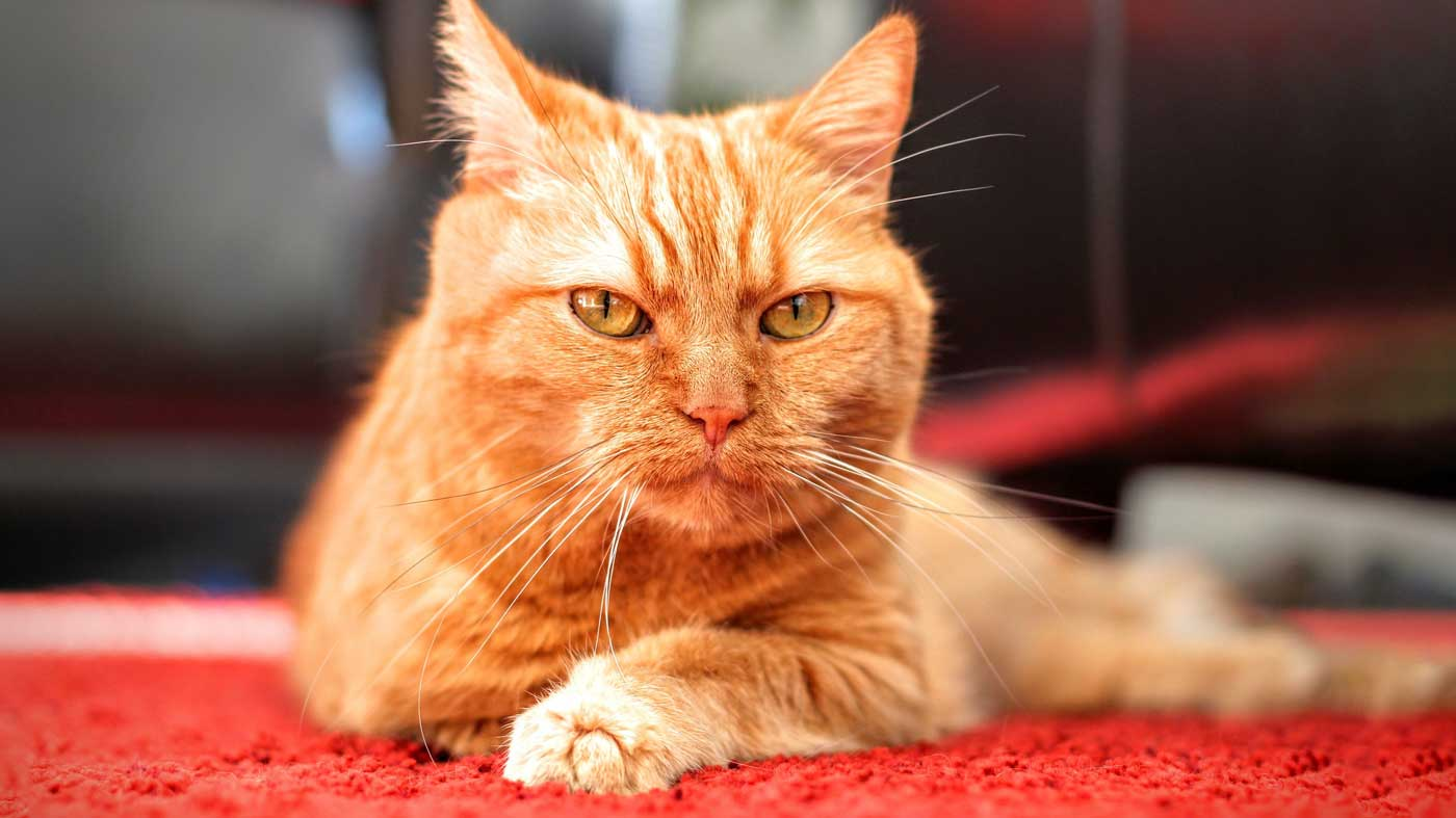 How To Stop Pets From Peeing On Carpets Petsblogs