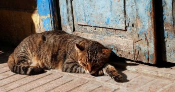 tabby cat napping on the porch