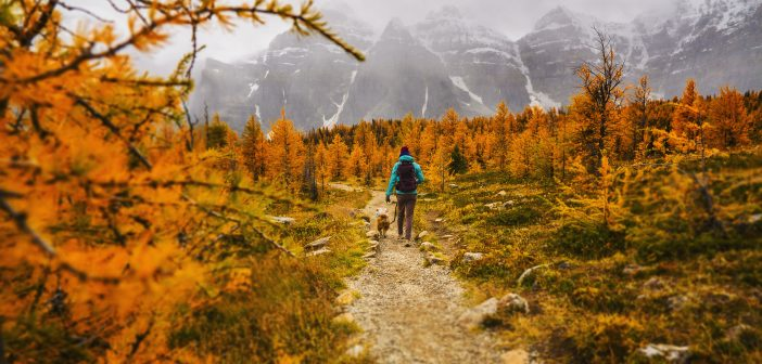 Meaningful Hobbies You Can Pursue With Your Dog