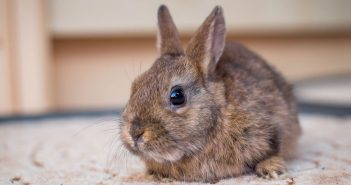 cute little brown bunny rabbit