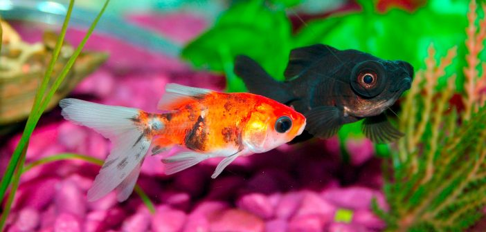 Hidden Dangers: Household Chemicals That Harm Your Fish