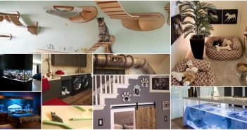 collage of pet home customization examples