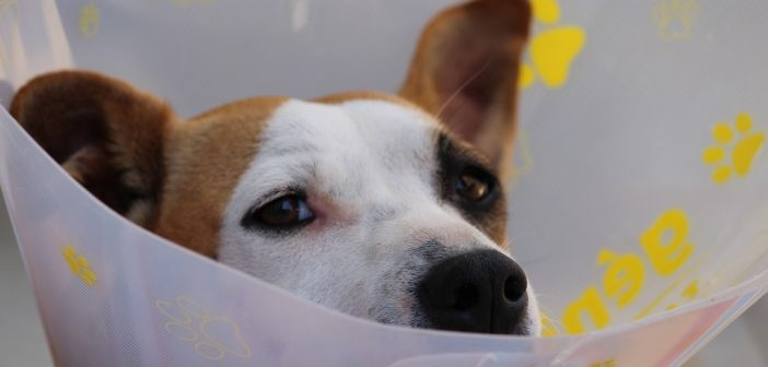 Should You Get Pet Insurance?