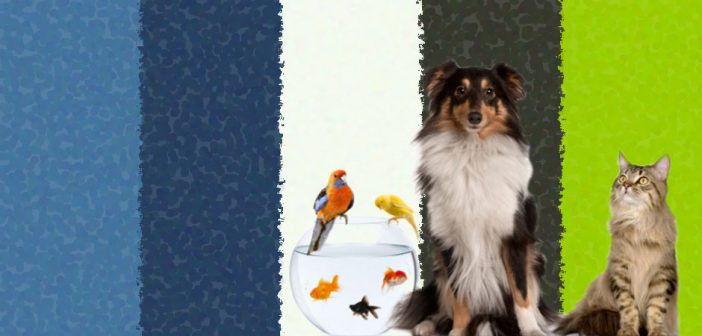 dog, cat, two birds, and three fish