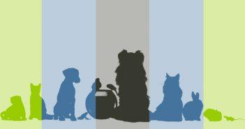 dog, cat, ferret, rabbit, mouse, birds, fish