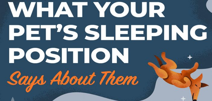what your pet's sleep position says about them banner
