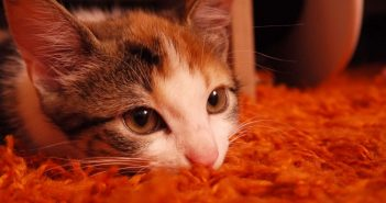 Tips for Decorating a Pet Allergy-Friendly Home