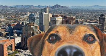 aerial photo downtown phoenix arizona skyline behind dog