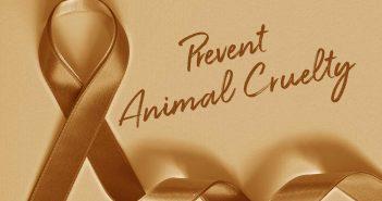 orange ribbon prevent animal cruelty banner