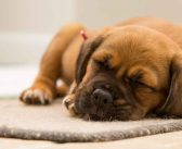 3 Keys To Success in House Training a Puppy