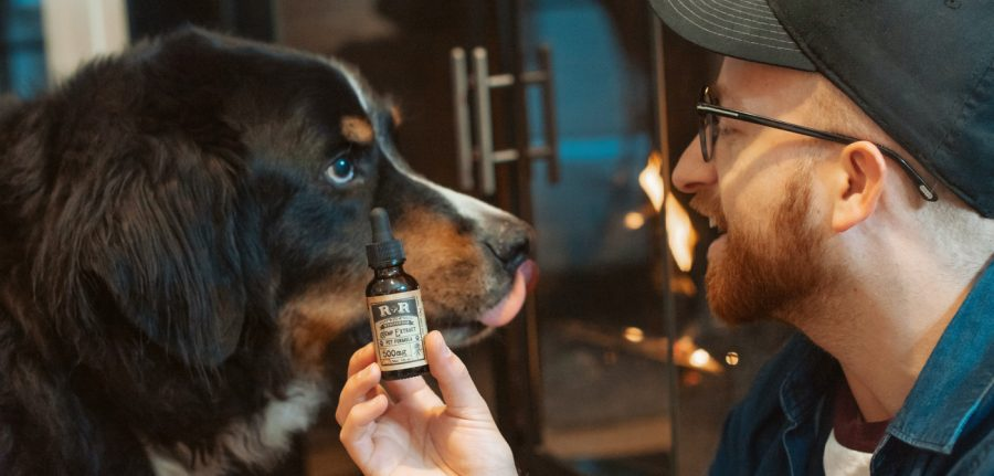 man holding up a bottle of cbd oil next to his big dog
