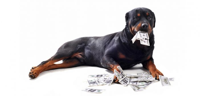 rottweiler with cash money in his mouth and on the ground around him