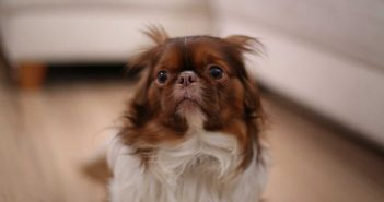 scared little dog