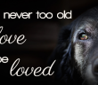 old dog you're never too old to love or be loved