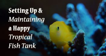 setting up and maintaining a happy tropical fish tank