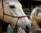 Solstice East's Equine Therapy Program is Helping Adolescents Gain Mental Health