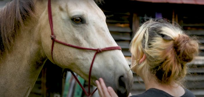 young woman touching a horse's face