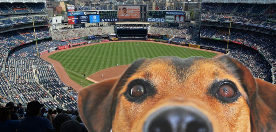 surprise stadium behind dog