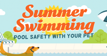 summer swimming pool safety with your pets