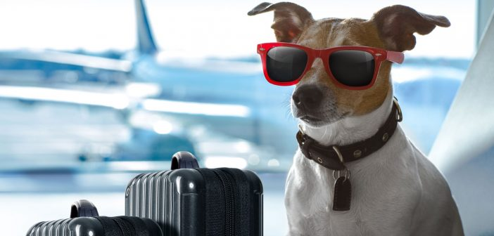 dog wearing sunglasses sitting next to suitcases in an airport