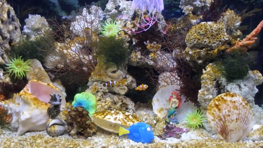 tropical fish aquarium