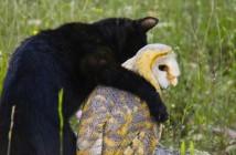 unlikely animal friends on nat geo
