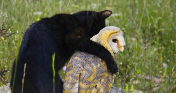 unlikely animal friends on nat geo