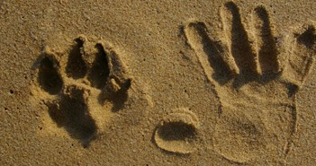 paw print next to hand print in the sand