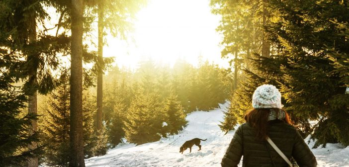 Warm and Safe: Tips for Protecting Your Dog This Winter