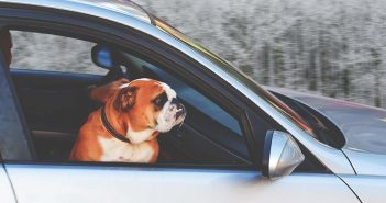 dog looking out a car window during a winter road trip