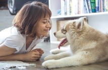 Woman looking at husky puppy on the floor.