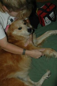 woman examining a dog's leg