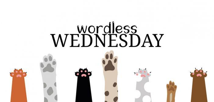wordless wednesday banner