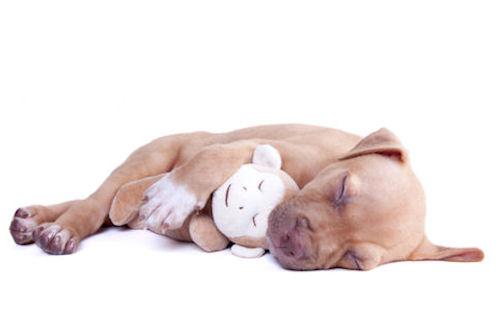 sleeping dog brook photography