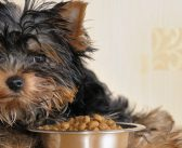 4 Ways To Help Your Dog Eat Better